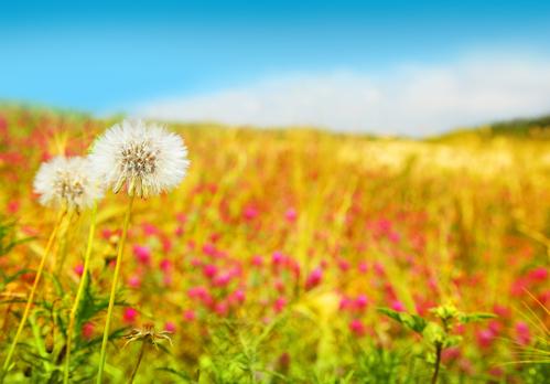 Springtime Holistic Pest Solutions