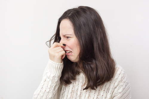 stink bug season