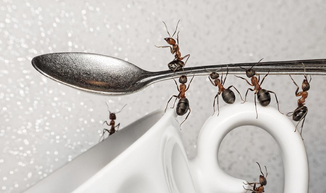 antskitchen