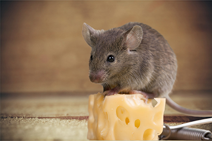4-reasons-rodents-love-virginia