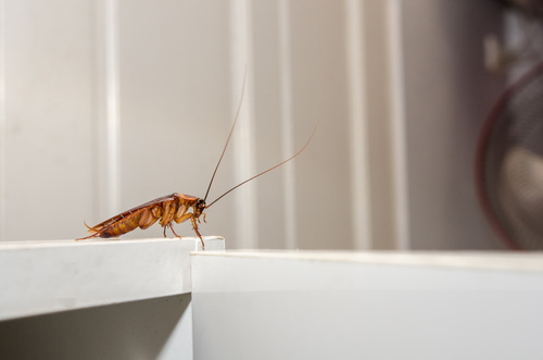 Why Are Cockroaches So Hard To Kill?