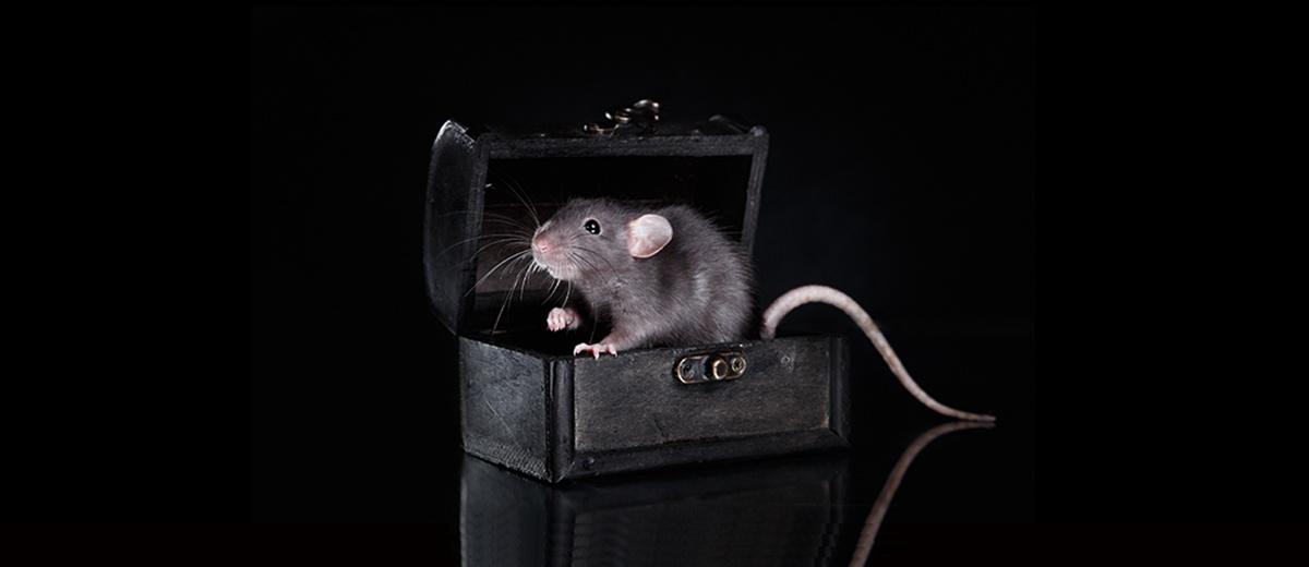 Rodent-Ciontrol-Holistic-Pest