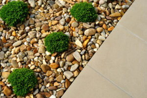 termite control landscaping tips